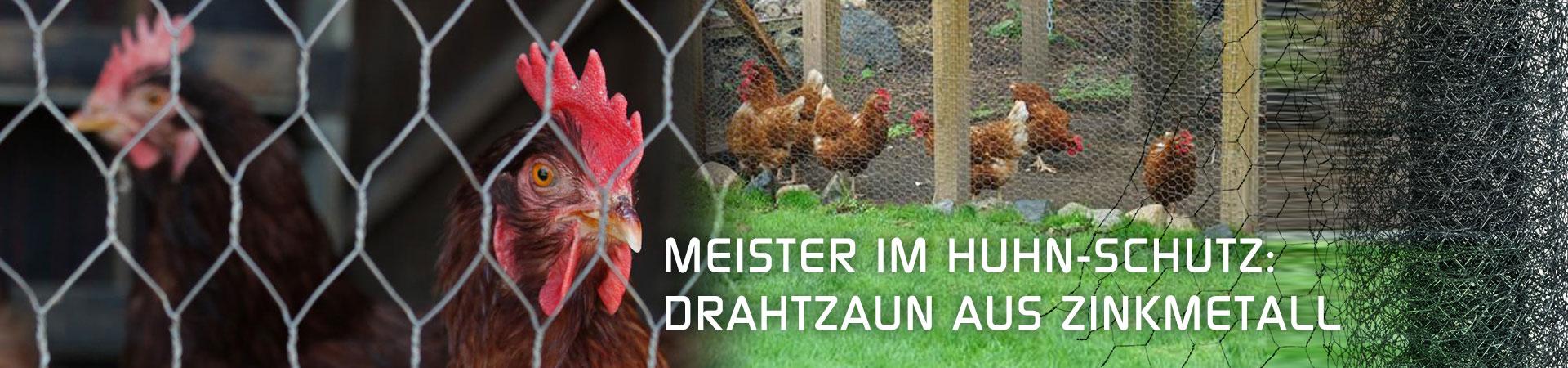 Hühner hinter Drahtzaun